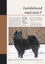 Eurasier - Hunden