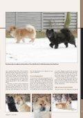 Eurasier - Hunden - Page 2