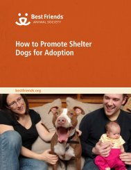 How to Promote Shelter Dogs for Adoption - Best Friends Animal ...