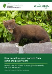 Pine Marten information leaflet - National Parks & Wildlife Service