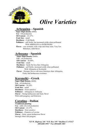 Olive Varieties Arbequina—Spanish - Windmill Nursery