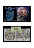 Bewegte Gehirne – Gehirne in Bewegung - Seite 6