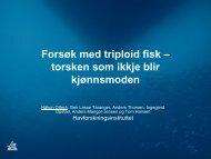 Forsøk med triploid fisk – torsken som ikke blir kjønnsmoden