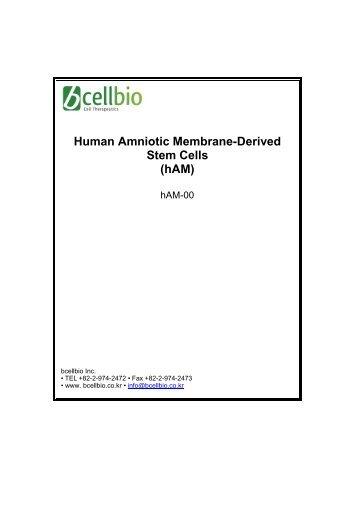 Human Amniotic Membrane-Derived Stem Cells (hAM)