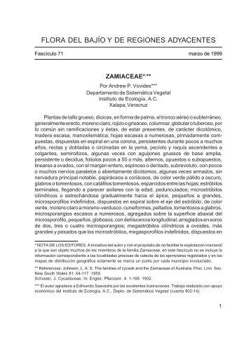 Zamiaceae - Inecol
