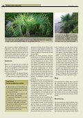 Winterharte Palmen - Melminsider - Seite 3