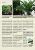 Winterharte Palmen - Melminsider - Seite 4
