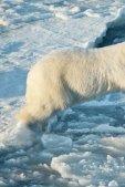 Schützt die Arktis! - Greenpeace - Seite 2