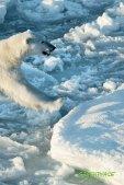 Schützt die Arktis! - Greenpeace - Seite 3