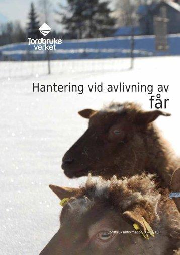 Hantering avlivning av får