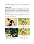 Diversidade de aves silvestres brasileiras comercializadas nas ... - Page 2