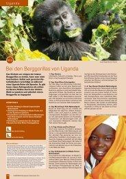 Bei den Berggorillas von Uganda - Globotrek