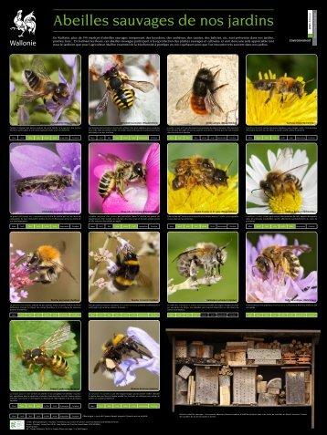 Environnement - La biodiversité en Wallonie