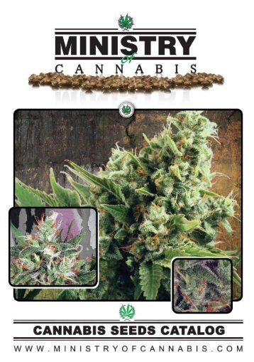 Download PDF Catalog - Cannabis Seeds