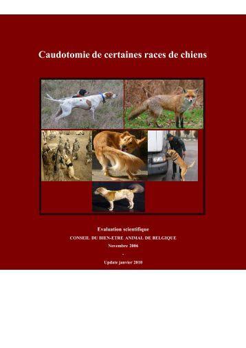 Caudotomie de certaines races de chiens