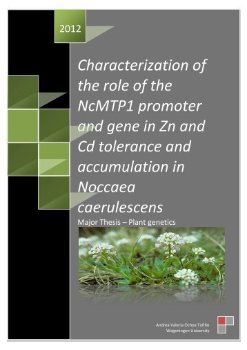 Characterization of the role of the NcMTP1 promoter and gene in Zn ...