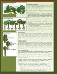 Amélioration du boisé lors des coupes - Page 2