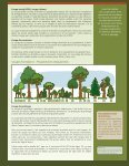 Amélioration du boisé lors des coupes - Page 4