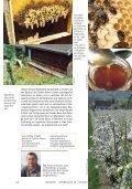 Honigbienen als Haustiere und Schwere Zeiten - Naturschutzbund - Page 3