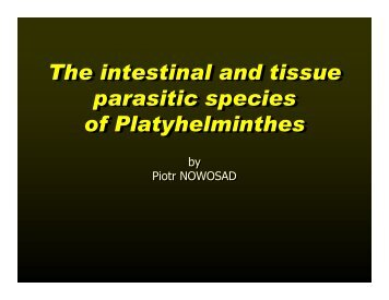 The intestinal and tissue parasitic species of Platyhelminthes The ...