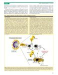 Regulatory T cells in obesity: the leptin connection - ICB - Page 3