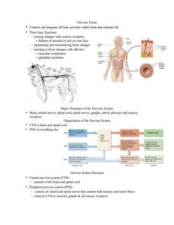 biology 201 worksheet on nervous system brain and spinal cord. Black Bedroom Furniture Sets. Home Design Ideas