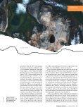 A frágil crosta do Nordeste - Revista Pesquisa FAPESP - Page 2