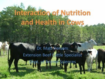 Interaction of Nutrition and Health in Cows - Department of Animal ...