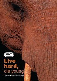 Live hard, die young: how elephants suffer in zoos