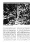 Conservation Status of Lesser Antillean Reptiles - International ... - Page 7