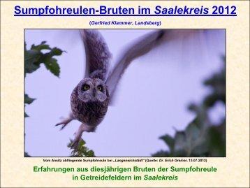 Sumpfohreulen-Bruten im Saalekreis 2012 - Gerfried Klammer