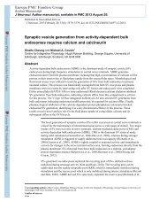 Synaptic vesicle generation from activity-dependent bulk ...