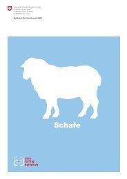 Tiere richtig halten - Schafe