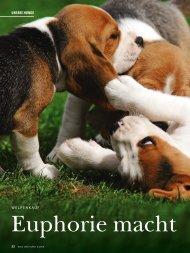 Was Sie beim Welpenkauf beachten sollten... - Wild und Hund