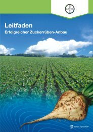Leitfaden Erfolgreicher Zuckerrüben-Anbau (PDF ... - Rüben - Bayer