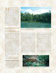 The Lacandon Jungle Bulwark of Biodiversity - Page 2