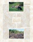 The Lacandon Jungle Bulwark of Biodiversity - Page 3