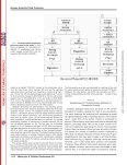 Proteomics Analysis of Human Amniotic Fluid*DS - University of ... - Page 3