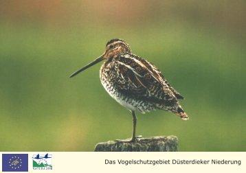 Das Vogelschutzgebiet Düsterdieker Niederung - Biologische ...