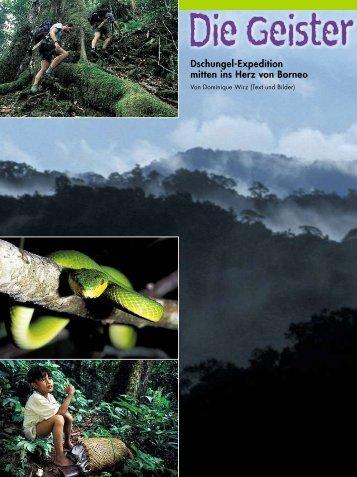 Dschungel-Expedition mitten ins Herz von Borneo - Dominique Wirz