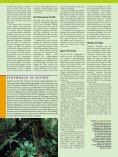 Dschungel-Expedition mitten ins Herz von Borneo - Dominique Wirz - Seite 3