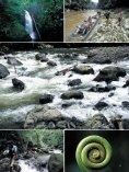 Dschungel-Expedition mitten ins Herz von Borneo - Dominique Wirz - Seite 4