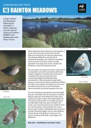 Rainton Meadows - Durham Wildlife Trust