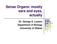 Sense Organs: mostly ears and eyes, actually - George A. Lozano
