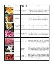 2013 shrubs - Abrahamson Nurseries