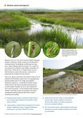 Coastal grazing marsh - Buglife - Page 3