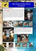 Agia Marina Donkey Rescue Newsletter - Page 6