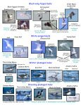 Seabird Identification Photo Card - Page 2