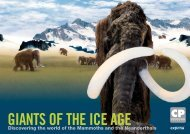 Discovering the world of the Mammoths and the ... - expona.net