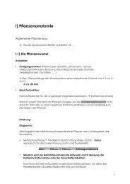 I) Pflanzenanatomie - Burkhard Schlemmer